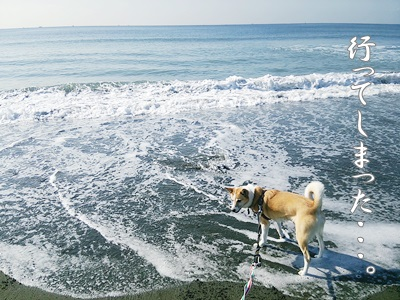 海散歩DSC_1527