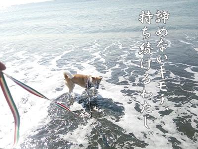 海散歩DSC_1531