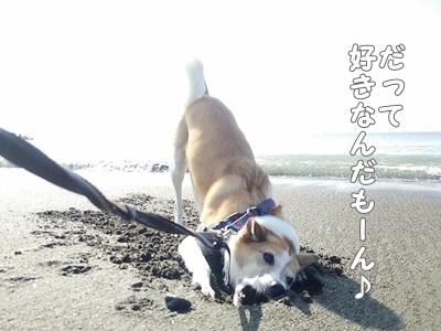 海散歩DSC_1535