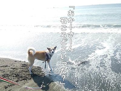 海散歩DSC_1539