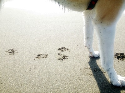 海散歩DSC_1546