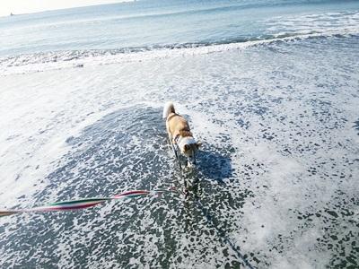海散歩DSC_1549