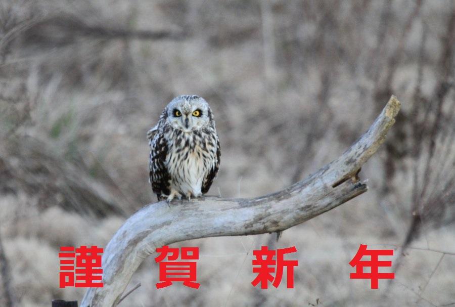 コミミズク2014-12-26-6-謹賀新年淀川-高浜IMG_1699