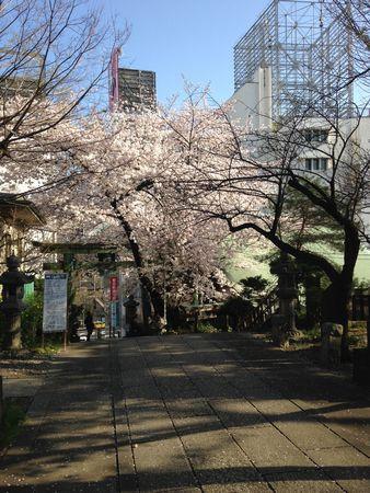20150401sakura4.jpg