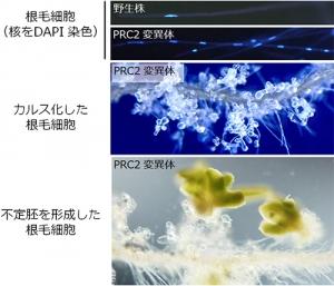 PRC2.jpg