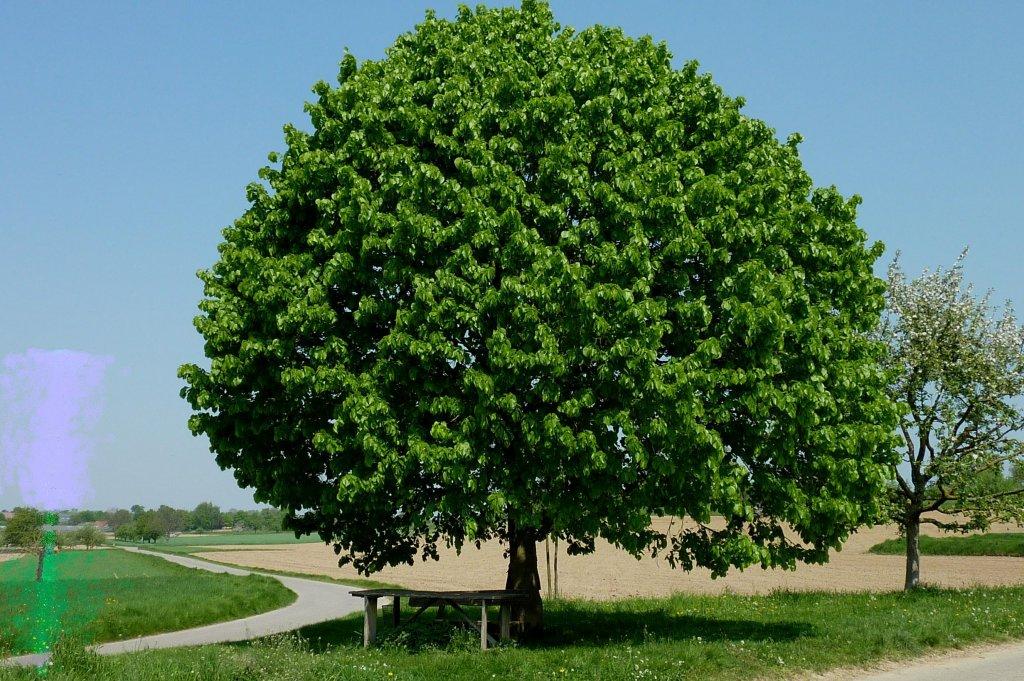 lindenbaum-2011-19117.jpg