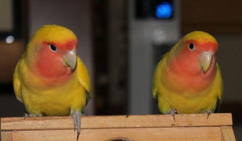 リクとミド仲良し2羽