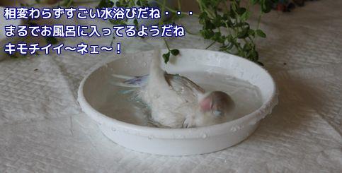 ロワのお風呂