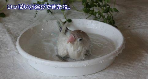 ロワの水浴び終了