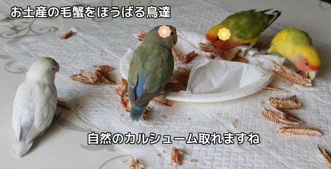 毛蟹美味しいね。