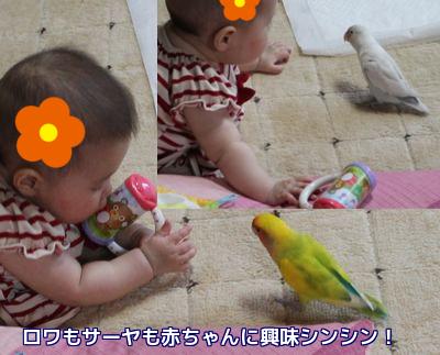 來花と鳥たち