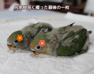 2羽の雛お別れだね