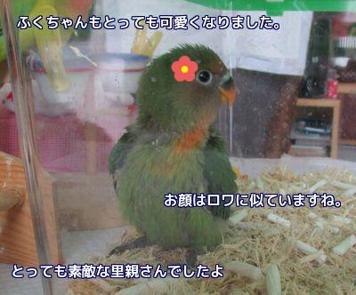 福ちゃん里子に2