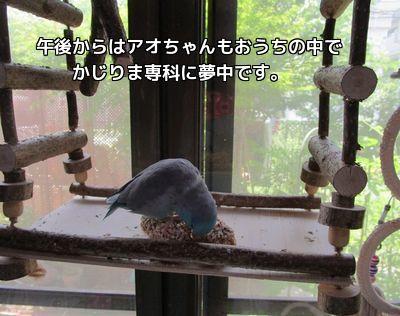 かじりま専科