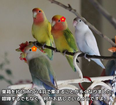 仲良く4羽で