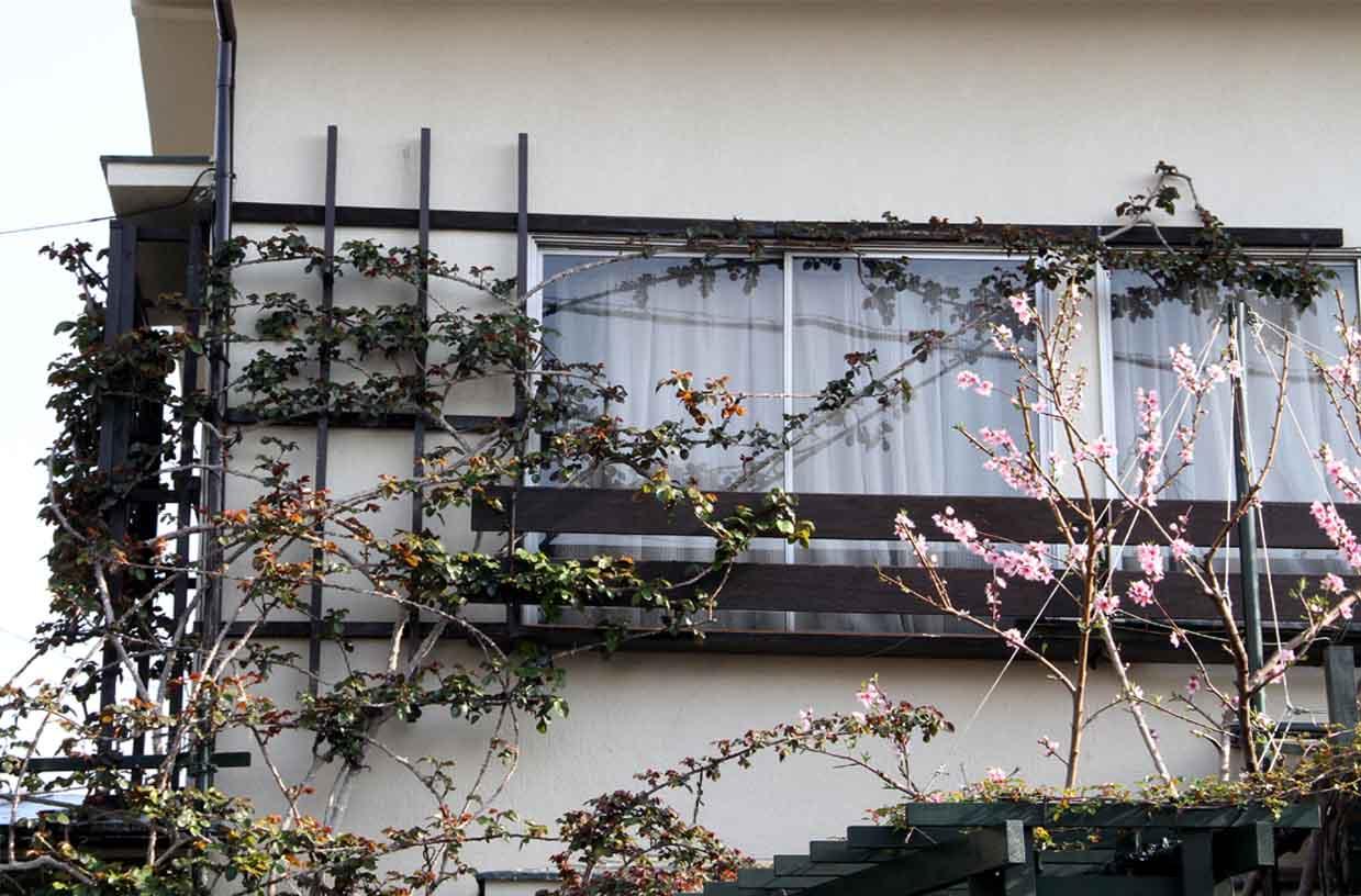 バラの新芽と桃の花(1)