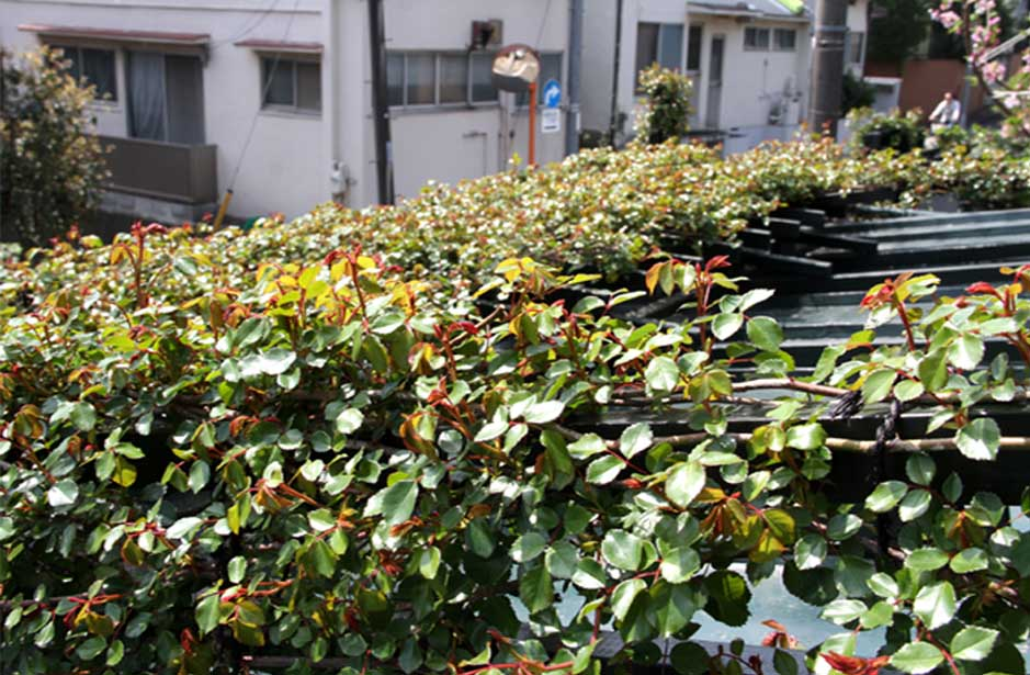 屋根から見下ろすバラ模様(2)