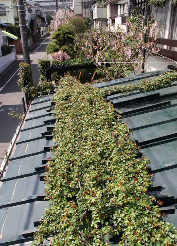 屋根から見下ろすバラ模様(3)