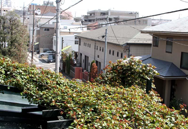 屋根から見下ろすバラ模様(4)