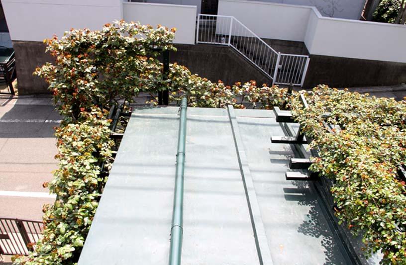 屋根から見下ろすバラ模様(5)