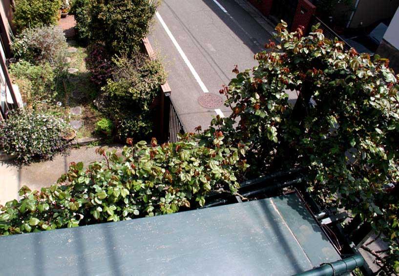 屋根から見下ろすバラ模様(6)