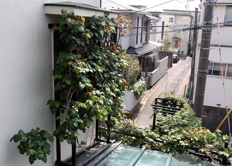 屋根から見下ろすバラ模様(7)