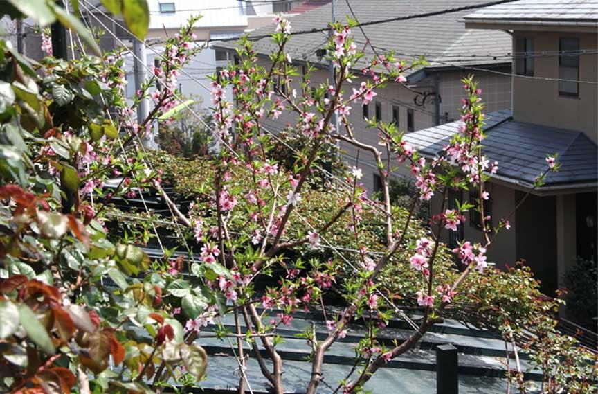 屋根から見下ろすバラ模様(9)