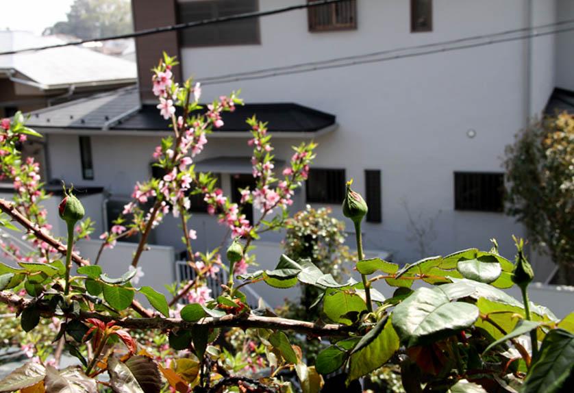屋根から見下ろすバラ模様(11)