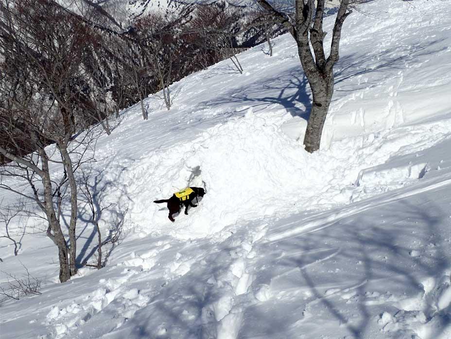 3月28日 雪中訓練(42)