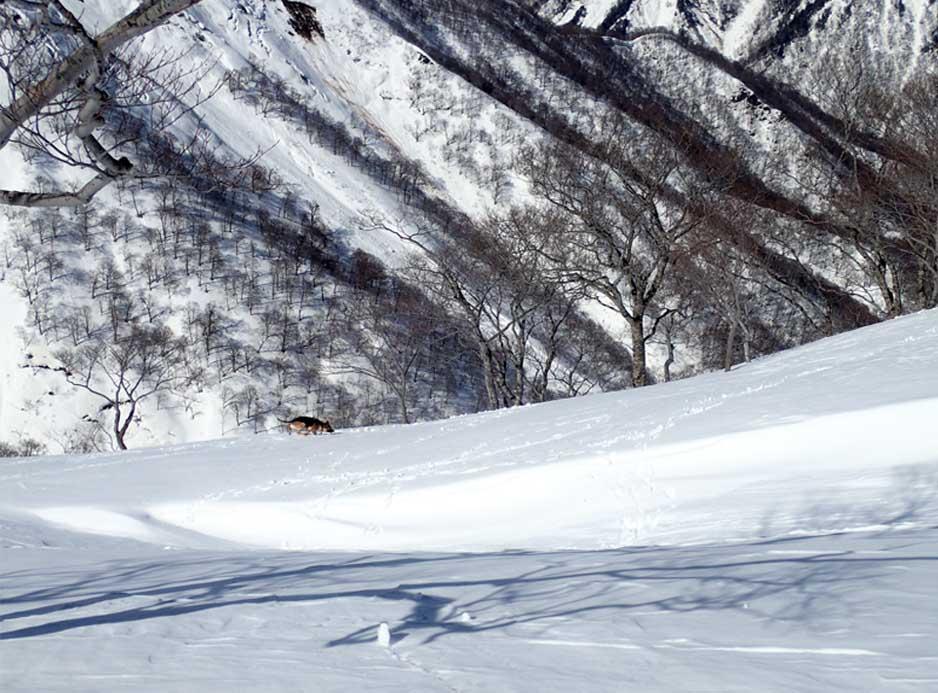 3月28日 雪中訓練(43)