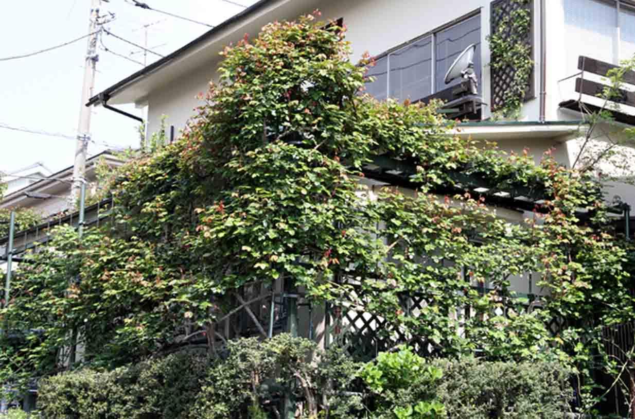 茂るつるバラ(5)