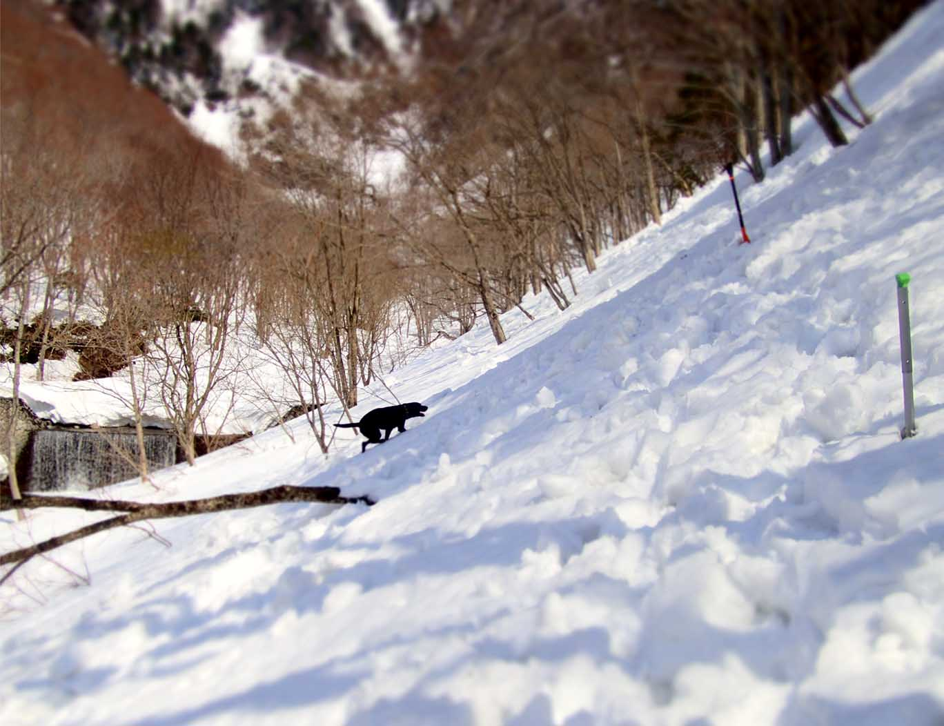 3月29日 雪中訓練(24)