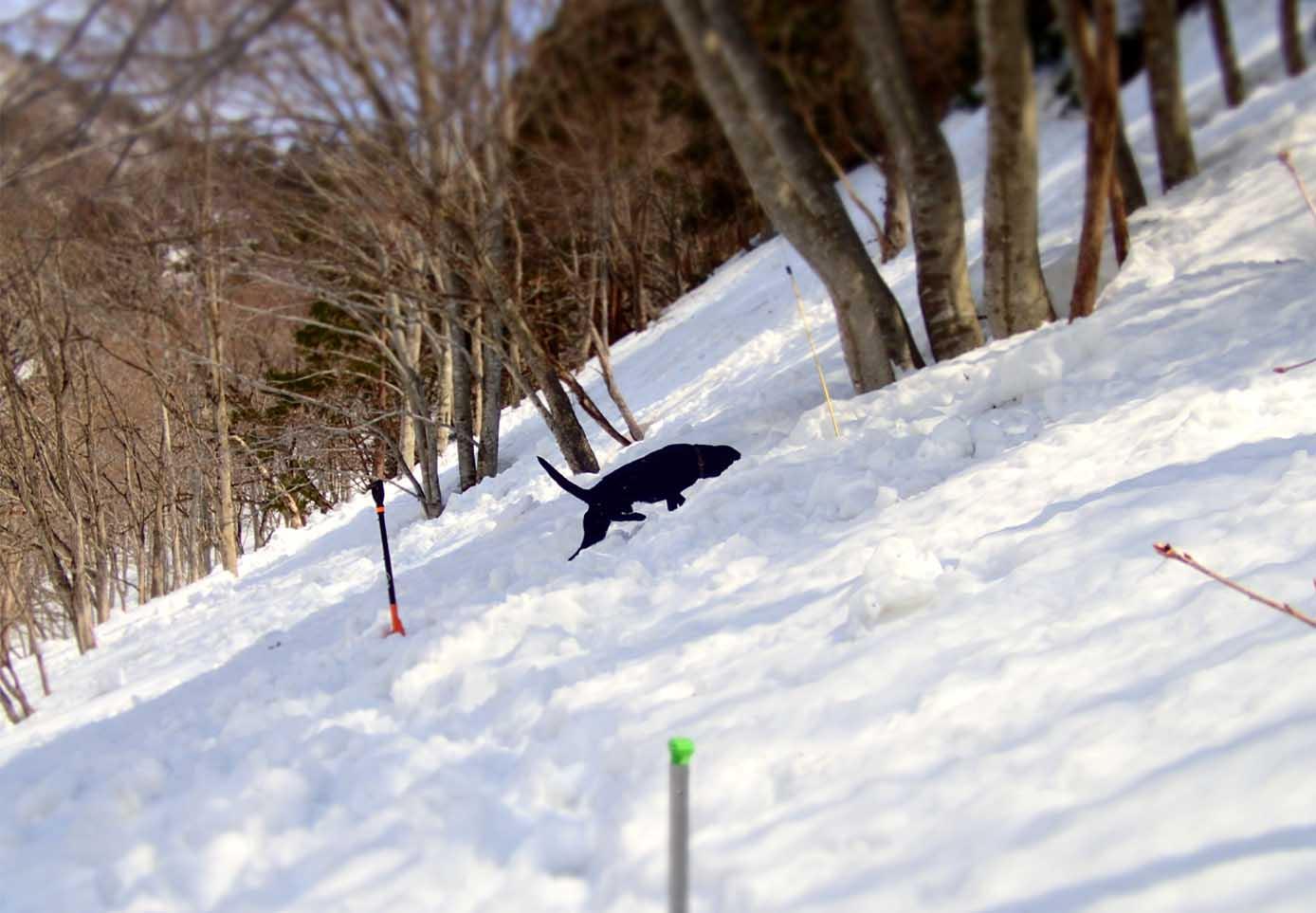 3月29日 雪中訓練(26)