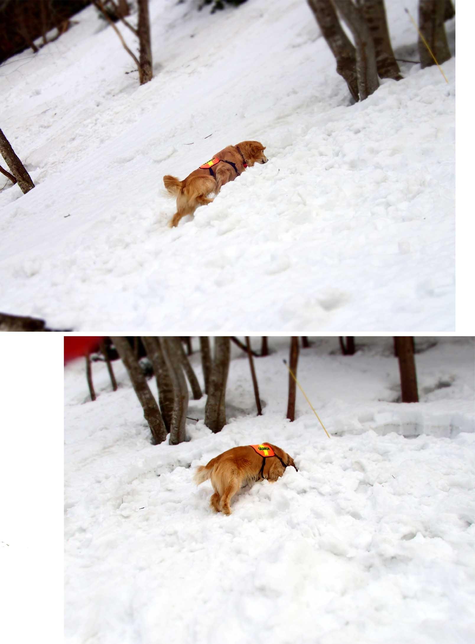 3月29日 雪中訓練(29)