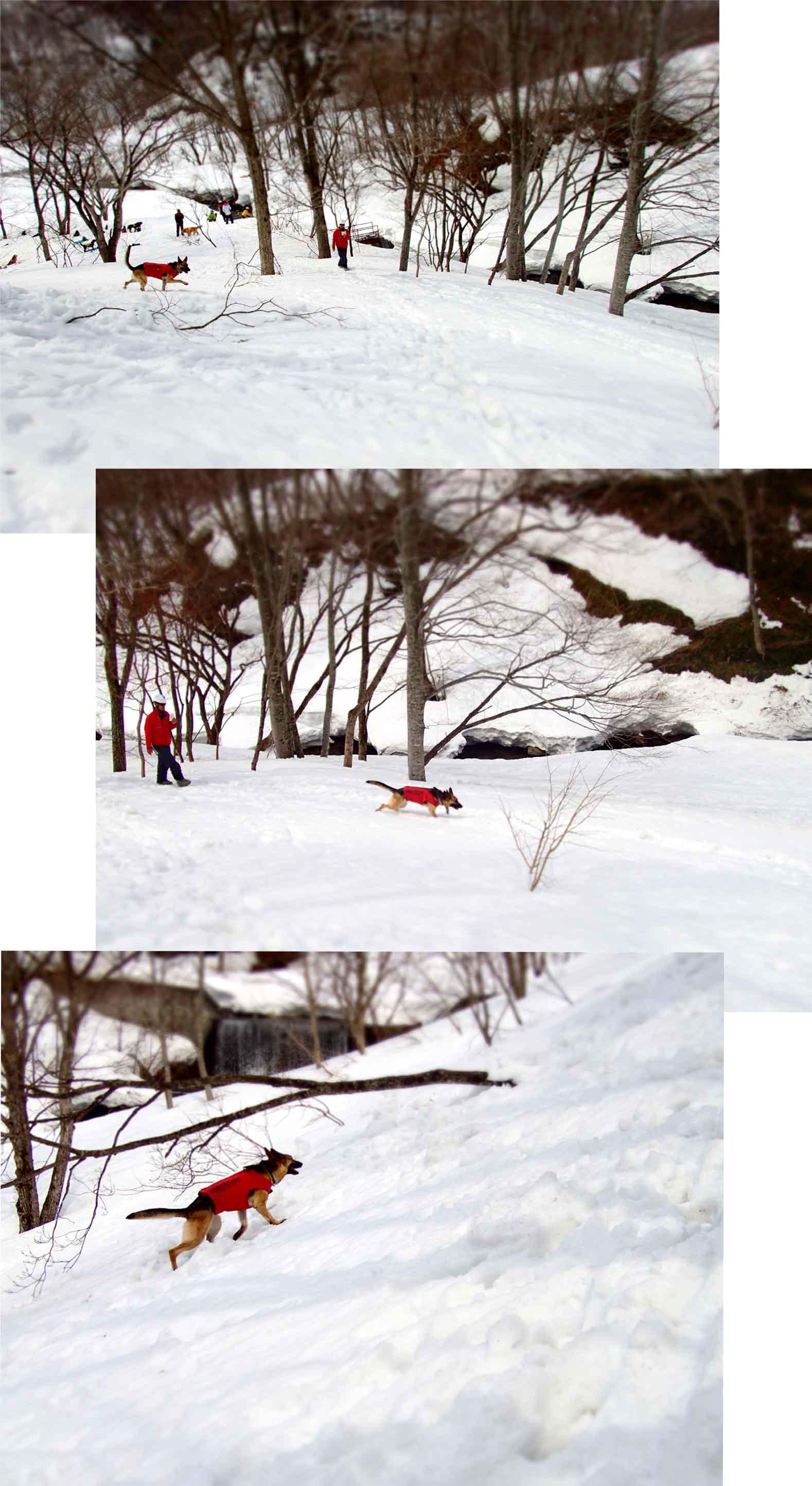 3月29日 雪中訓練(31)