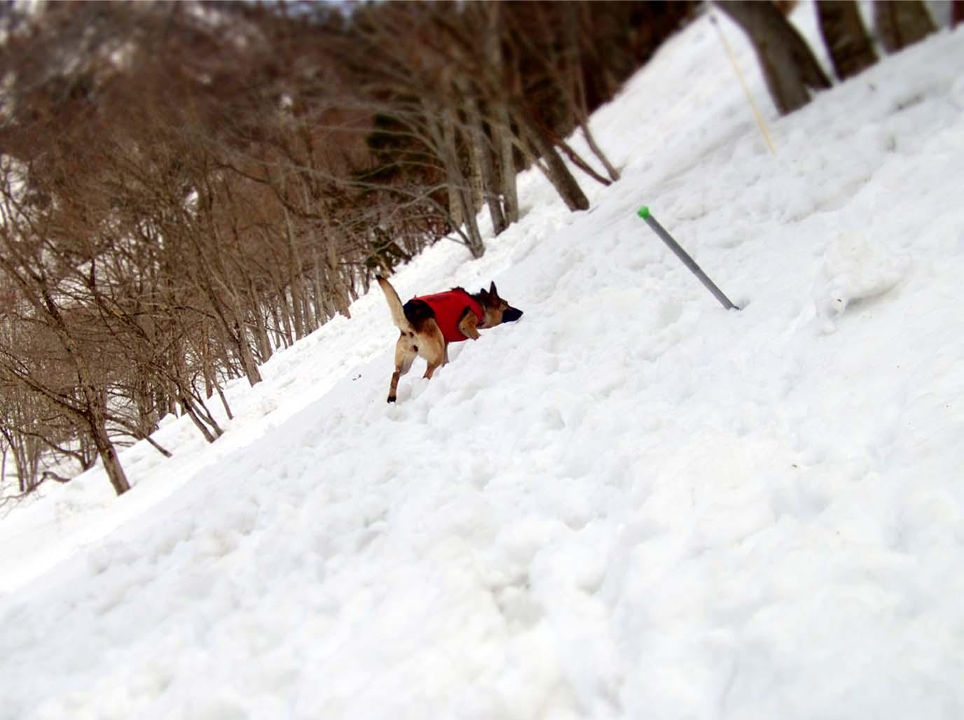 3月29日 雪中訓練(32)