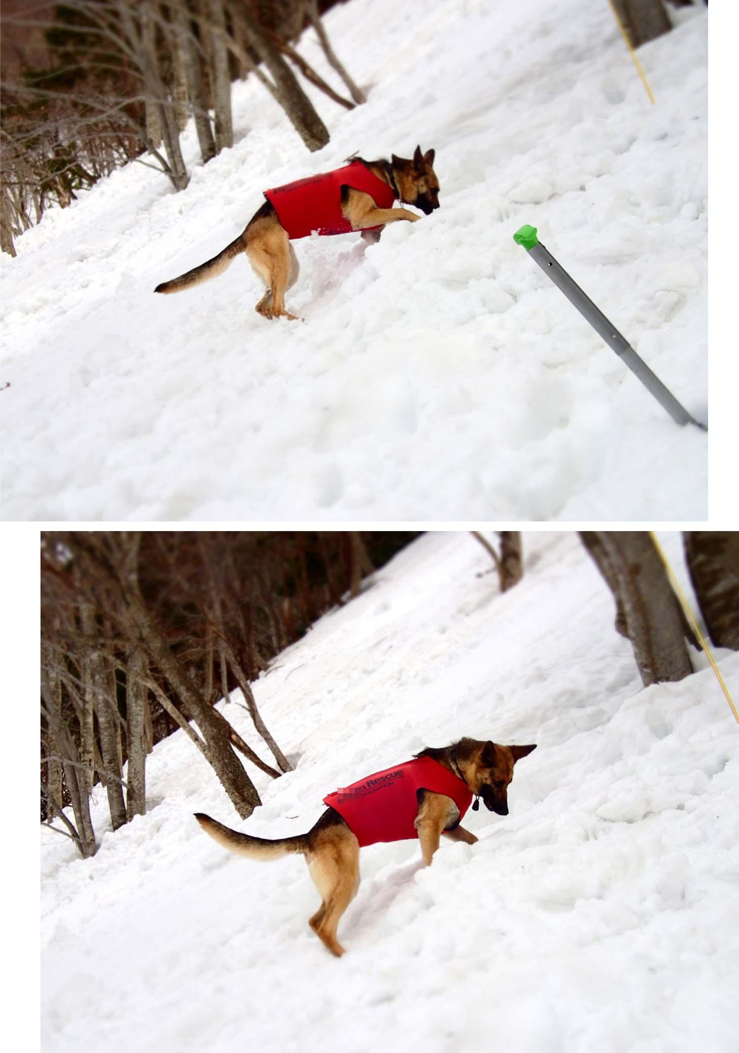 3月29日 雪中訓練(33)