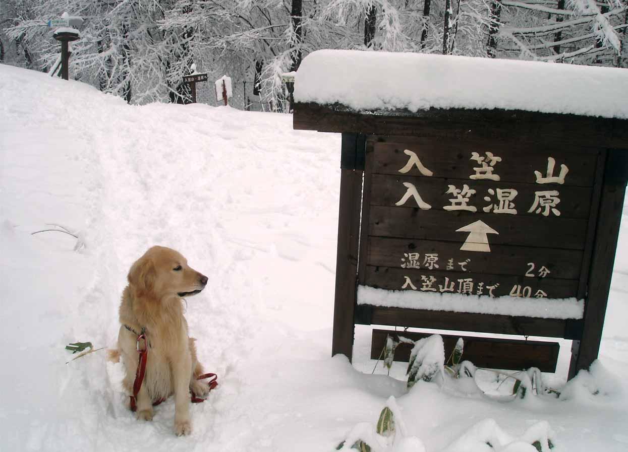 入笠山&訓練キャンプ(15)