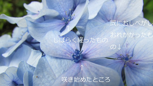 IMG_8546-1.jpg