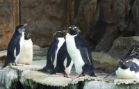 マリンピア松島水族館4ペンギンランド