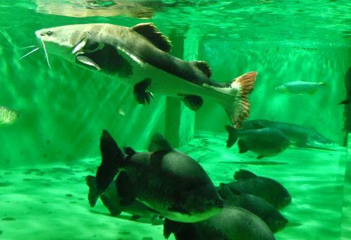 マリンピア松島水族館7ジャングルゾーン
