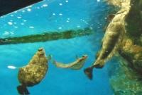 マリンピア松島水族館8個水槽カレイ