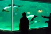 マリンピア松島水族館14イロワケイルカ