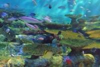 マリンピア松島水族館16サンゴの海