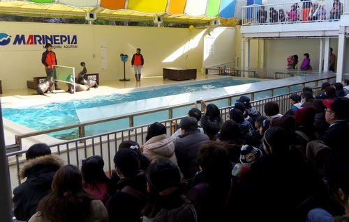 マリンピア松島水族館19アシカショー