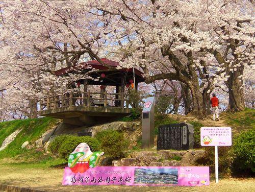 烏帽子山2014桜1