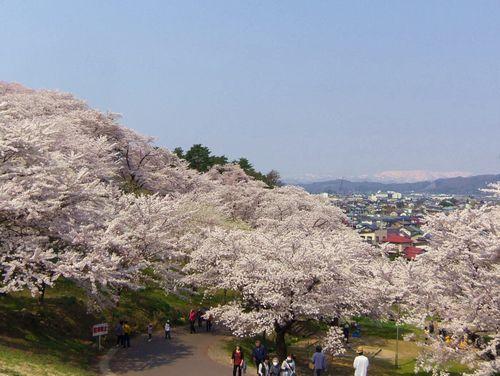 烏帽子山2014桜3駐車場側入口