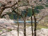 烏帽子山2014桜7山形新幹線