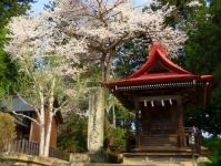 烏帽子山2014桜12温泉神社