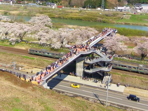 桜2015船岡城址・白石川堤4しばた千桜橋